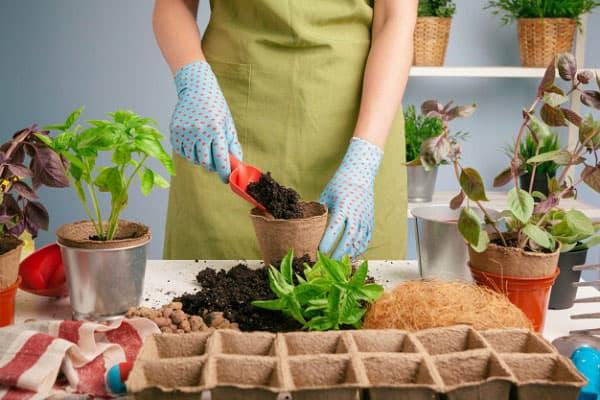 کوددهی به گیاهان آپارتمانی را چطور انجام دهیم؟