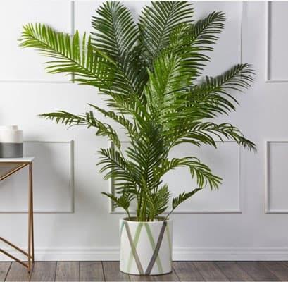 گیاه نخل داخل سالن